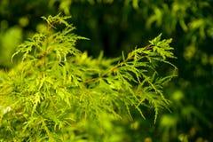 Folhas do verde no verde fotos de stock
