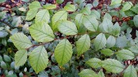 Folhas do verde nos fundos verdes Imagem de Stock