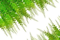 Folhas do verde para o fundo Fotografia de Stock