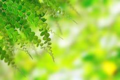 Folhas do verde para o fundo Fotografia de Stock Royalty Free