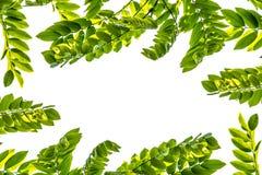 Folhas do verde para o fundo Imagens de Stock