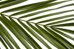 Folhas do verde para o fundo Foto de Stock Royalty Free