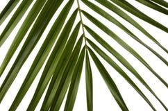 Folhas do verde para o fundo Foto de Stock
