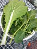 Folhas do verde para pakoras Fotos de Stock Royalty Free
