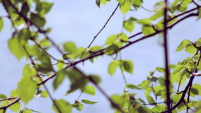 Folhas do verde que acenam na brisa filme