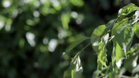 Folhas do verde que acenam na brisa vídeos de arquivo