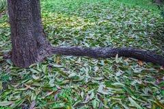 Folhas do verde que caem na terra Fotos de Stock
