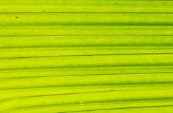 Folhas do verde sob a luz Imagem de Stock