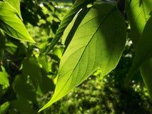 Folhas do verde sob o sol imagens de stock