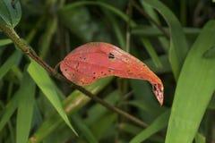 Folhas do verde sobre a folha verde do vermelho do fundo Imagens de Stock Royalty Free