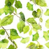 folhas do verde Teste padrão sem emenda do fundo watercolor ilustração stock