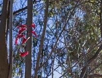 Folhas do vermelho da luz solar Foto de Stock