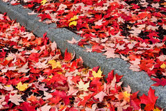 Folhas do vermelho e freio cinzento Fotos de Stock Royalty Free
