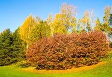 Folhas do vermelho em uma árvore Foto de Stock Royalty Free