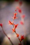 Folhas do vermelho em uma refeição matinal do arbusto Imagem de Stock Royalty Free