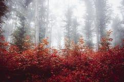 Folhas do vermelho na floresta encantado com névoa Imagens de Stock