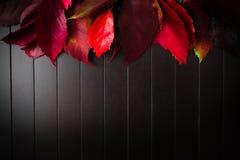 Folhas do vermelho na parte superior fotos de stock royalty free