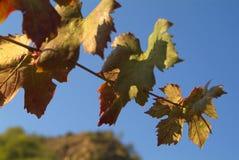Folhas do vermelho no vento foto de stock