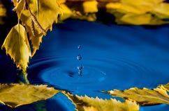 Folhas do vidoeiro sobre a água com ondinhas dos pingos de chuva Imagem de Stock Royalty Free