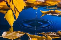 Folhas do vidoeiro sobre a água com ondinhas dos pingos de chuva Fotografia de Stock Royalty Free