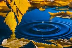 Folhas do vidoeiro sobre a água com ondinhas dos pingos de chuva Imagens de Stock Royalty Free