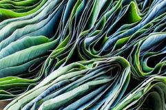 Folhas dobradas da banana Imagens de Stock Royalty Free