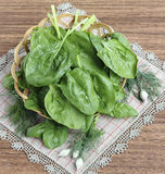 Folhas dos espinafres Fotografia de Stock