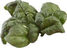 Folhas dos espinafres Imagem de Stock