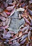 Folhas dos mortos da queda Imagens de Stock Royalty Free