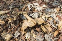 Folhas dos mortos do outono imagem de stock