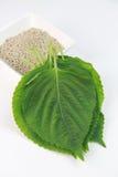 Folhas dos ocimoides do Perilla Imagens de Stock