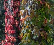 Folhas dos raios das árvores da luz solar da luz solar da luz solar nos ramos Fotos de Stock Royalty Free
