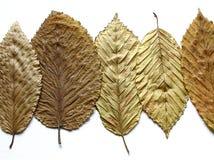 Folhas douradas foto de stock royalty free