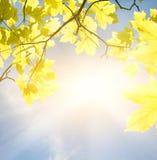 Folhas douradas fotografia de stock