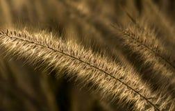 Folhas douradas fotos de stock
