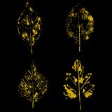Folhas douradas no fundo preto Imagem de Stock