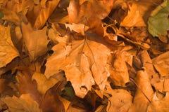 Folhas durante a estação de queda Fotografia de Stock