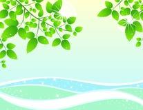 Folhas e água Foto de Stock Royalty Free