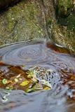 Folhas e água fotografia de stock royalty free