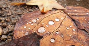 Folhas e água Fotografia de Stock