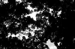 Folhas e árvore do preto Imagem de Stock Royalty Free