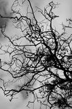 Folhas e árvore do preto Fotos de Stock
