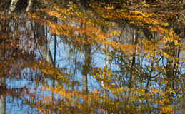 Folhas e árvores da queda refletidas na água Imagem de Stock