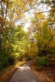 Folhas e árvores do outono imagens de stock