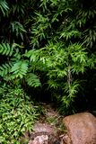 Folhas e arbustos verdes dos bambus em um jardim imagem de stock