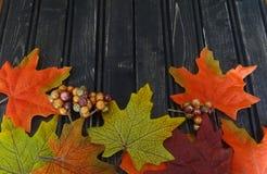 Folhas e bagas de outono Fotos de Stock Royalty Free