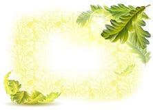 Folhas e bolotas do carvalho Fotos de Stock Royalty Free