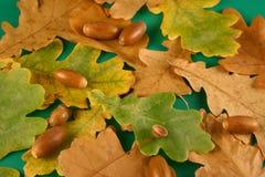 Folhas e bolotas do carvalho Imagens de Stock Royalty Free