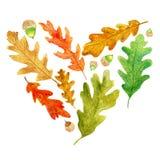 Folhas e bolotas do carvalho do outono em uma forma do coração ilustração do vetor