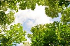 Folhas e céu Fotografia de Stock